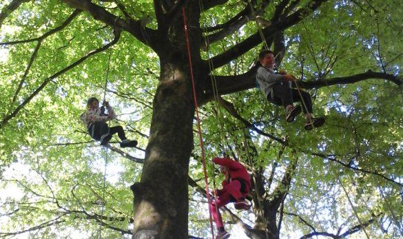 vignette-grimpe-arbre-01