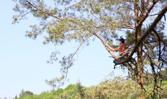 vignette-grimpe-arbre-04