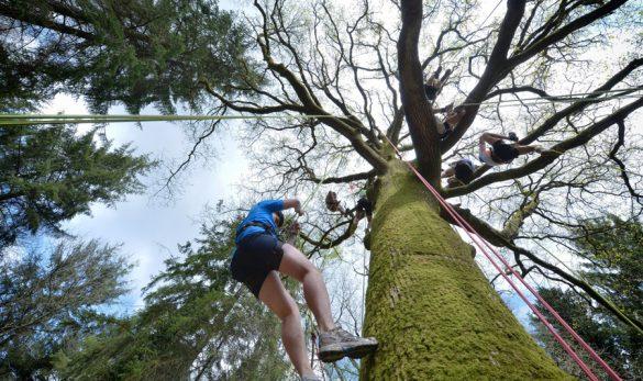 vignette-grimpe-arbre-06