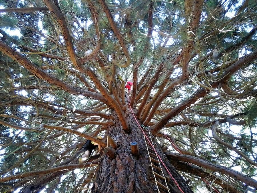 l 39 arbre lutik d couvrez votre environnement autrement grimpe d 39 arbres l 39 arbre lutik 22. Black Bedroom Furniture Sets. Home Design Ideas